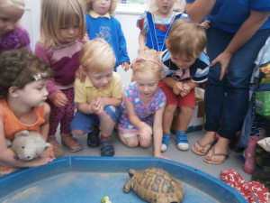 Had a lovely visit from Fifi the tortoise!!